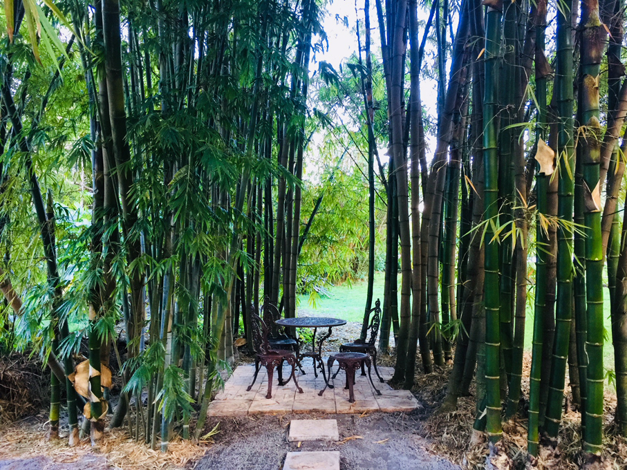 bamboo tea room 907x680